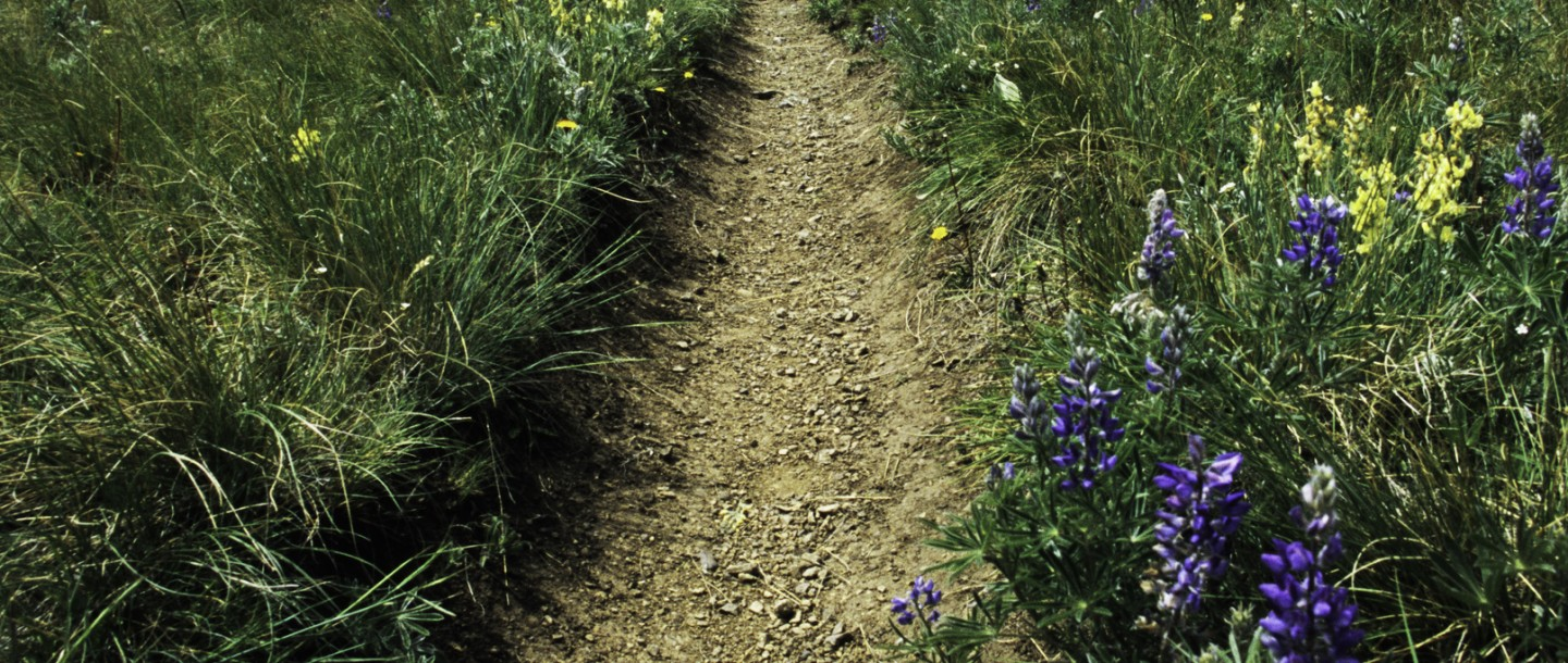 Trail in the Gravelly Range