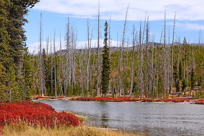 autumn in yellowstone by lewis & clark river